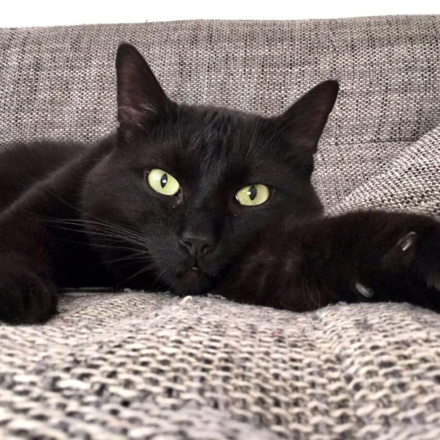 Kitty Proved Schlafstellen