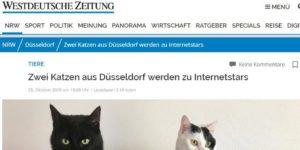 WZ Westdeutsche Zeituing Tiger & Sternchen Internetstars