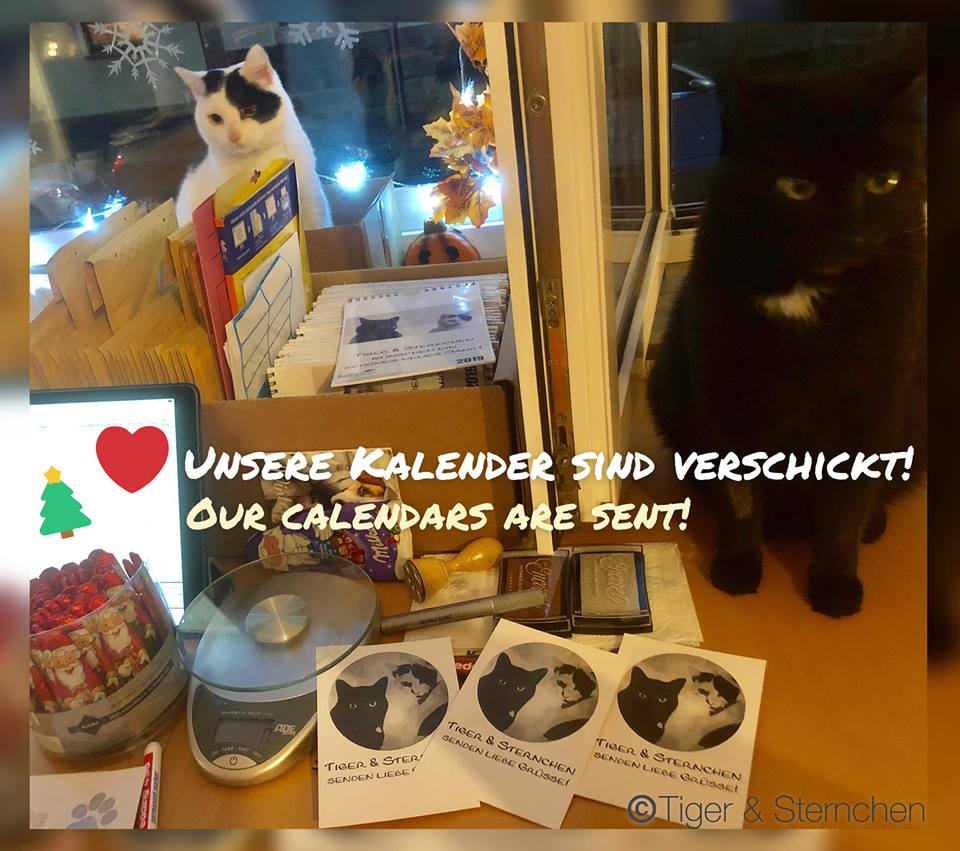 Kalender 2019 Tiger & Sternchen