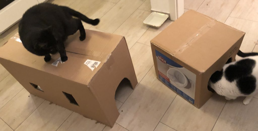 Katzen Karton