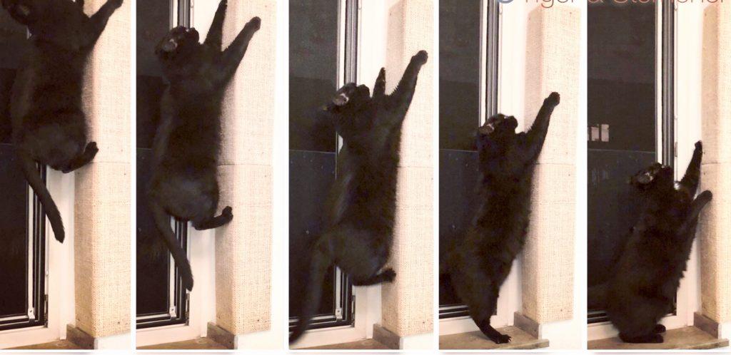 Kartzwand Kratzkanze Sisal Katze