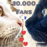 10.000 Facebook Fans