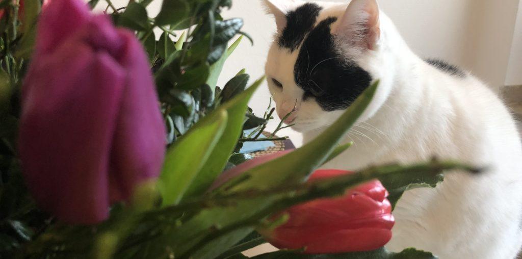 Katzen und giftige Pflanzen