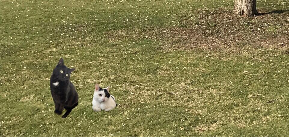 Freigänger - wenn die Katze raus will